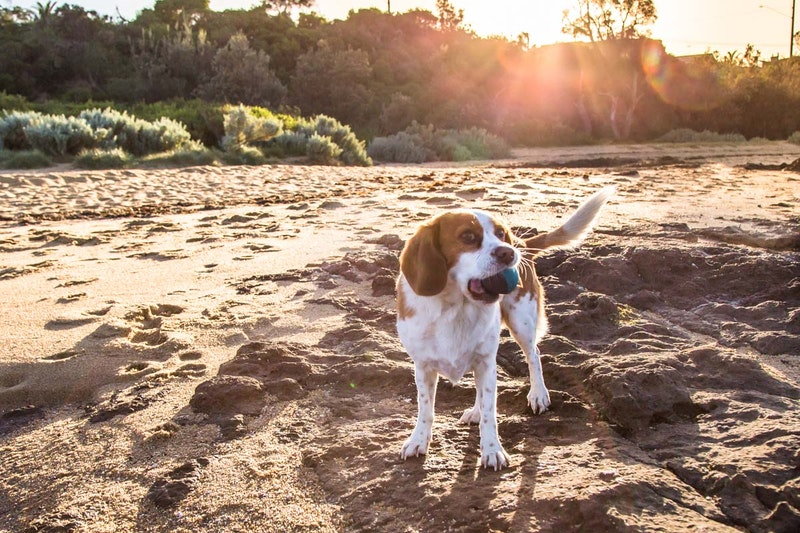 Example Portfolio 9 for Pet Photography in Gold Coast